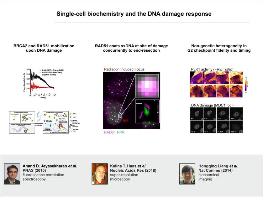 DDR_singlecellbiochemistry_AE